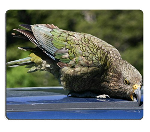 Luxlady Mousepad New Zealand native bird Kea trying to vadalize a car IMAGE 33831437 (Sexy Robber)