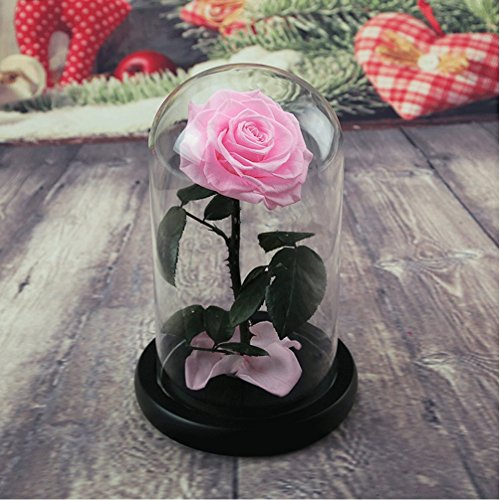 Preserved Fresh Flower, Live Forever Rose, Enchanted Rose,Natural Eternal Life Rose in Glass Dome Cover with Gift Box for Valentine's Day, Mother's Day, Anniversary, Birthday, wedding (pink)