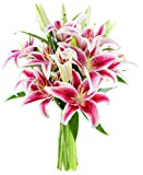 Bouquet of 8 Fresh Cut Stargazer Lilies - by KaBloom
