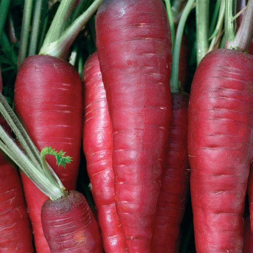 Atomic Red Carrots, 200+ Premium Heirloom Seeds, (Isla's Garden Seeds), Non Gmo, 90% Germination, Highest Quality