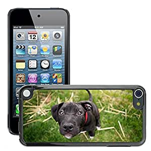 Hot Style Cell Phone PC Hard Case Cover // M00046688 dog animals pets // Apple iPod Touch 5 5G 5th
