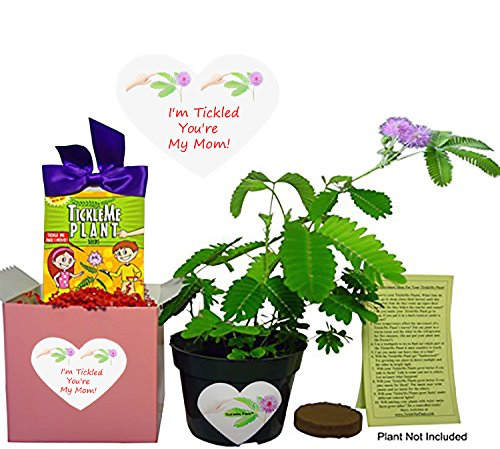 TickleMe Plant Mother's Day/Birthday Gift Box Set - To grow