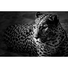 Black and White Leopard - Art Print Poster,Wall Decor,Home Decor(29.5x19.5inches)