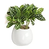 6 Inch White Ceramic Wall Mounted, Hanging or Freestanding Decorative Flower Planter Vase Holder Display