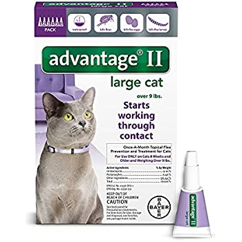 Amazoncom Cheristin For Cats Flea Treatment Count Pet Supplies - 21 cats losing fight against technology
