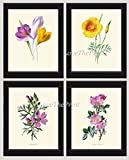 Flower Print Set of 4 Antique Botanical Beautiful Wildflowers Crocus California Poppy Eschscholzia Musk Mallow Sweet Briar Rose Pink Yellow Spring Summer Garden Plant Home Decor Wall Art Unframed HUL
