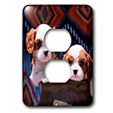 3dRose Danita Delimont - Puppies - Cavalier Puppies coming out of a ceramic flower pot, MR - Light Switch Covers - 2 plug outlet cover (lsp_258250_6)