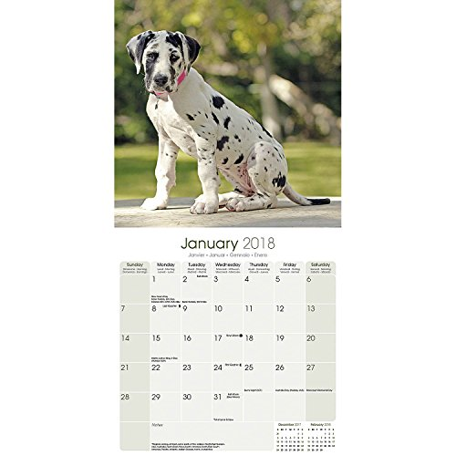 Great Dane Calendar 2018 - Dog Breed Calendar - Premium Wall Calendar 2017-2018 Photo #2
