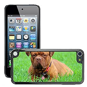 Super Stella Slim PC Hard Case Cover Skin Armor Shell Protection // M00145317 Barbara De Bordeaux Dogue De Bordeaux // Apple ipod Touch 5 5G 5th