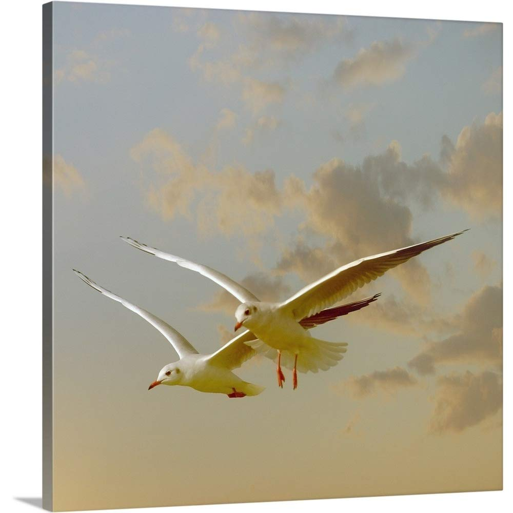 Gallery-Wrapped Canvas Entitled Two Gulls Flying in Evening Light Against Sky Great Big Canvas 16''x16''