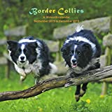 Border Collies Calendar - 2016 Wall calendars - Dog Calendars - Monthly Wall Calendar by Magnum