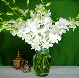 Fresh Flowers - 20 Just Orchids White Dendrobium with Vase