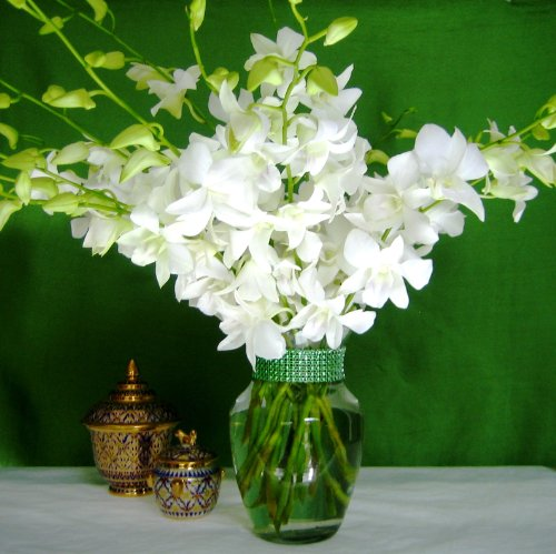 Fresh Flowers - 20 Just Orchids White Dendrobium with Vase by Just Orchids