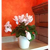 maceta de auto-riego Hidro+z en cerámica ecológica de 15 cm