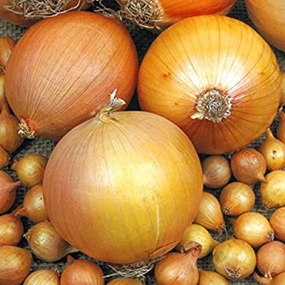 Big Daddy Onion 200 Seeds #0623 Item Upc#650348692094