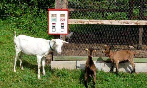 2er Tierfutterautomat Automat für Fischfutter Wildfutter usw. inkl. Aussengehäuse