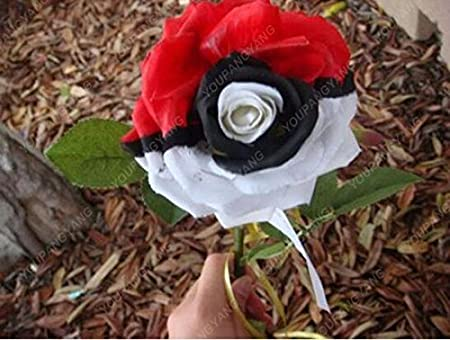 100pcs 20 Arten Von Rosen Samen Black Rose So Charming Bonsai