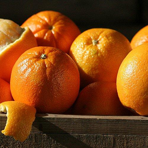 Navel Oranges - 4 lbs - The Fruit Company