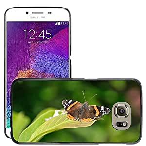 Hot Style Cell Phone PC Hard Case Cover // M00114609 Butterfly Animal Colorful Summer // Samsung Galaxy S6 (Not Fits S6 EDGE)