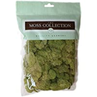Quality Growers QG2060 Preserved Reindeer Moss, 108.5...