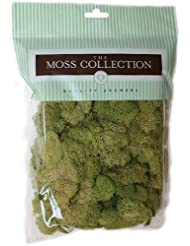 Quality Growers Preserved Reindeer Moss, 108.5 Cubic Inch, Sp...