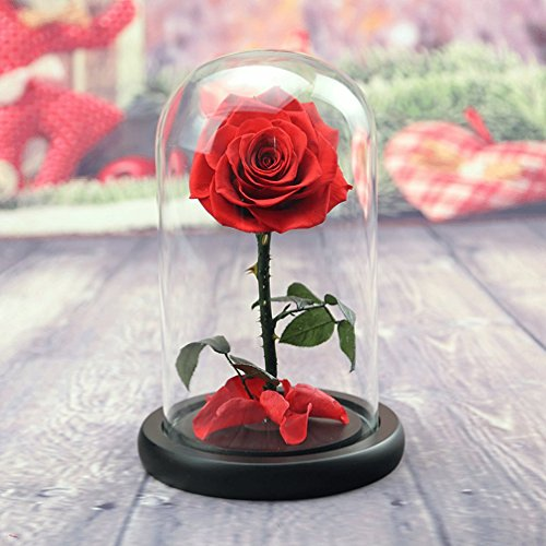 Send Balloons Same Day (Preserved Fresh Flower, Live Forever Rose, Enchanted Rose,Natural Eternal Life Rose in Glass Dome Cover with Gift Box for Valentine's Day, Mother's Day, Anniversary, Birthday, wedding (red))