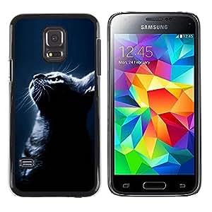 Be Good Phone Accessory // Dura Cáscara cubierta Protectora Caso Carcasa Funda de Protección para Samsung Galaxy S5 Mini, SM-G800, NOT S5 REGULAR! // Black Cat Night American Shorth