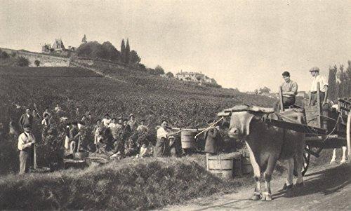 - BORDEAUX WINE. St Emilion - Chateaux, Domaines, Grands Crus - 1949 - old print - antique print - vintage print - printed prints of Gironde