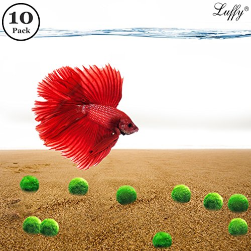 10 Mini Betta Balls - Live Round-Shaped Marimo Plants for Aquarium - Natural Toys for Betta Fish - Perfect for Big and Medium Fish Tanks from Luffy