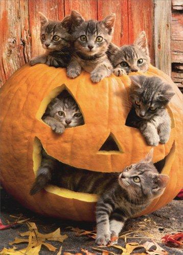 Kittens In Jack O Lantern - Avanti Cat Halloween Card -