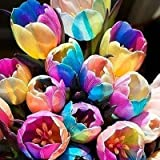 SILKSART 15 Nice Bulbs! Tulip Bulbs early bloom Perennial Bulbs for Garden Planting Beautiful Flower--SHIPPING NOW!!!