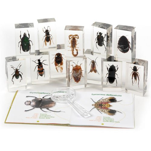 geo-world-bugs-world-collection-of-12-real-insects