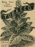 Connecticut Broadleaf Tobacco Seeds ~100 seeds