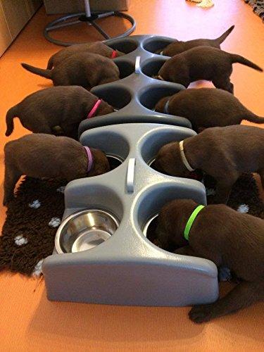 Weanafeeda Maxi 6 Multiple Bowl Puppy Litter Feeder