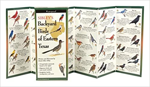 Sibley's Backyard Birds of Eastern Texas (Foldingguides)