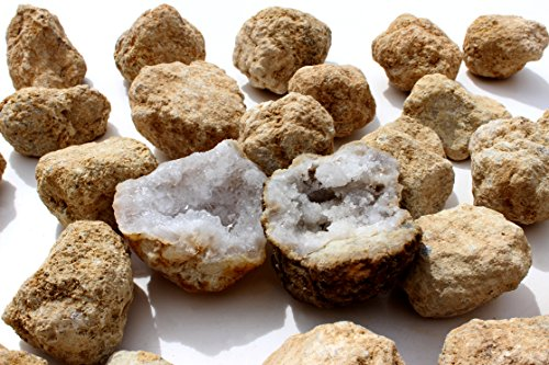 """50 Break Your Own Geodes, 90% Hollow Medium ( 2-2.5"""") Easy Crack Open & Discover Surprise Crystals Inside! Educational Info and Instructions Included, Fun Party Favors & Prizes, Dancing Bear Brand by Dancing Bear (Image #5)"""