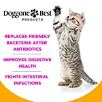 Doggone Best Products Cat Probiotics - Helps with Diarrhea and Constipation - All Natural Powder - Can Help Gas, Digestive Issues and Bad Breath - 8 oz - Made in The USA 12