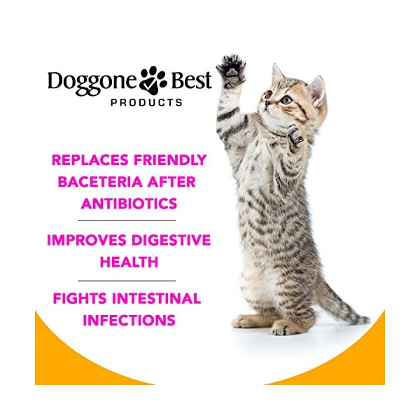 Doggone Best Products Cat Probiotics - Helps with Diarrhea and Constipation - All Natural Powder - Can Help Gas, Digestive Issues and Bad Breath - 8 oz - Made in The USA 3