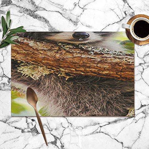 Young Raccoon Dripping Nose Oak Near Animals Wildlife Animal Washable Placemats For Dining Table Double Fabric Printing Polyester Place Mats For Kitchen Table Set Of 6 Table Mat 12