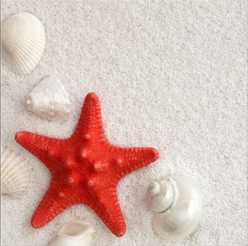 Startonight Canvas Wall Art Red Starfish, Beach USA Design for Home Decor, Dual View Surprise Artwork Modern Framed Ready to Hang Wall Art 31.5 X 31.5 Inch 100% Original Art Painting! by Startonight