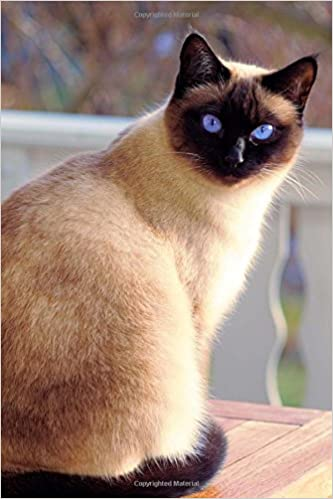 Buy Seal Point Siamese Cat Is Looking At You Pet Journal Book Online At Low Prices In India Seal Point Siamese Cat Is Looking At You Pet Journal Reviews Ratings