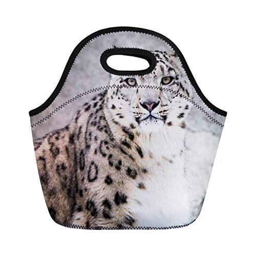 (Deeoor Neoprene Lunch Tote Bag Animal Frontal Portrait of Snow Leopard in Big Cat Mammal Reusable Cooler Bags Insulated Thermal Picnic Handbag for Travel,School,Outdoors, Work )