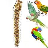 Heaven2017 Spiral Birds Feeder, Millet Treat Fruit Holder for Parrot – Stainless Steel