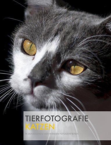 Tierfotografie: Katzen in den eigenen vier Wänden fotografieren. (German Edition)