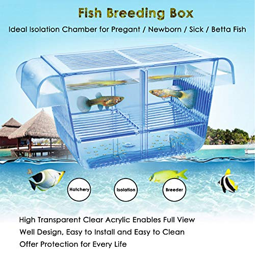 Capetsma Fish Breeding Box, Acrylic Fish Isolation Box with Suction Cups, Aquarium Acclimation Hatchery Incubator for Baby Fishes Shrimp Clownfish and Guppy. Small Size (S)
