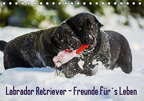 Labrador Retriever - Freunde für´s Leben (Tischkalender 2016 DIN A5 quer): Labrador Retriever - die seit Jahren wohl beliebteste Hunderasse, auf 13 ... (Monatskalender, 14 Seiten ) (CALVENDO Tiere)