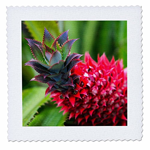 3dRose Danita Delimont - Food - USA, Hawaii, Maui, Pineapple Bromeliad growing in the Maui - 18x18 inch quilt square (qs_259247_7) by 3dRose