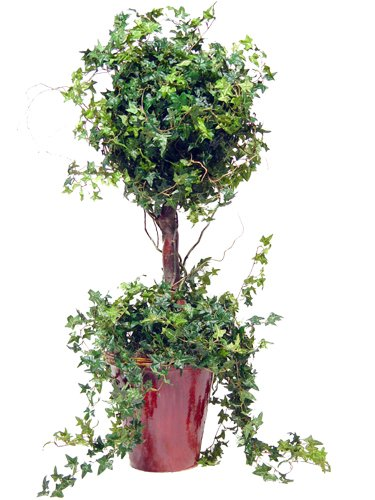 SINGLE MINI ENGLISH IVY TOPIARY 40