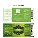 Tea Tree Essential Oil, Tea Tree Oil for Acne, Hair and Diffuser, 100% Pure Melaleuca Oil by Pure Body Naturals, 1 Ounce