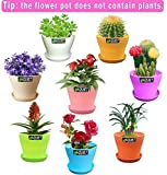 QUIET 8 Colors Cute Mini Colorful Plastic Flower Pots Planters With Saucers,Seedlings Flower &Seeds Germination & Succulent Plants Pots